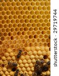 a closeup view of worker bees... | Shutterstock . vector #29719744