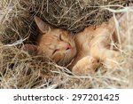 Stock photo cute little cat is sleeping comfortably in a pile of straw in the daytime 297201425