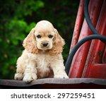 cute puppy sitting on rusty... | Shutterstock . vector #297259451