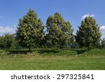 Three Linden Trees  Three Youn...