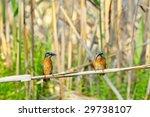 kingfisher  alcedo atthis  | Shutterstock . vector #29738107