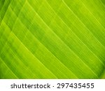 Green Banana Leaf Close Up