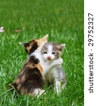 kittens playing in the grass... | Shutterstock . vector #29752327