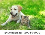 Stock photo friendly dog and cat resting over green grass background 297594977