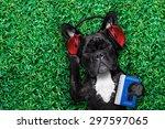French Bulldog Dog  Listening...