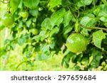 Green Passion Fruit In The...