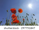 poppies in the sun | Shutterstock . vector #297751847