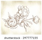 peons flower sketch. vector... | Shutterstock .eps vector #297777155