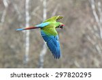 military macaw  ara militaris ... | Shutterstock . vector #297820295
