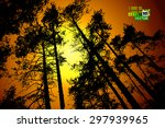 Forest Tree Silhouettes On The...