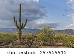 landscape of the saguaro... | Shutterstock . vector #297959915