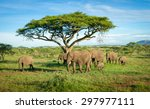 Elephants Group In African...