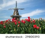Dutch windmill in Holland, Michigan, during  the Tulip Festival - stock photo