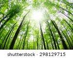Beautiful Forest Landscape In...