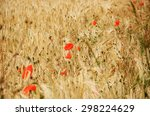 Red Poppies And Ripe Wheat...