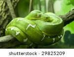 Постер, плакат: Green snake coiled on