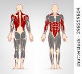 dorsi  oblique  deltoid  abs ... | Shutterstock .eps vector #298259804