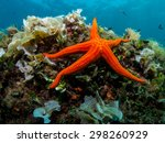 Starfish And Sponge Of The...