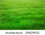 green grass background | Shutterstock . vector #29829931