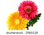 artificial flowers   Shutterstock . vector #2983128