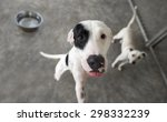 dog hungry is a cute dog... | Shutterstock . vector #298332239
