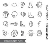 human anatomy body parts... | Shutterstock .eps vector #298332941