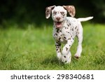 Stock photo happy dalmatian puppy running outdoors 298340681
