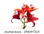 attractive lilies red on white... | Shutterstock . vector #298397315