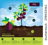 Fig  Infographics. Fruits...