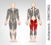 leg muscles. fitness training ... | Shutterstock .eps vector #298472801