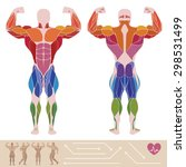 the human muscular system ... | Shutterstock .eps vector #298531499
