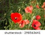 Poppy Wildflowers   Close Up...