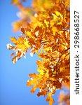 oak leaves against blue sky ... | Shutterstock . vector #298668527