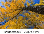 Autumn Tree On A Background Of...