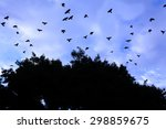 A Flock Of Crows Flying Away...
