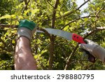 Pruning An Apple Tree With...