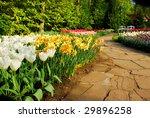 Colorful Tulips In Dutch Sprin...