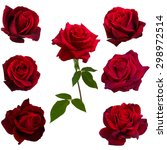 Collage Seven Red Roses Isolated - Fine Art prints