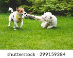 Stock photo two dogs playing tug war with a toy 299159384