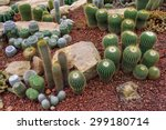 Cactus Planted In A Botanical...