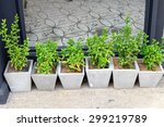 a small plant pot displayed in...   Shutterstock . vector #299219789