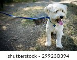 Stock photo sitted dog with leash 299230394