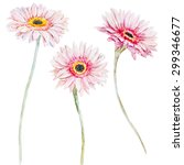 Watercolor Pink Gerbera Flowers ...