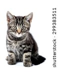 Stock photo funny striped kitten isolated on white 299383511