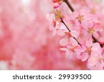 pink blossom | Shutterstock . vector #29939500