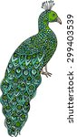 hand drawn doodle peacock... | Shutterstock .eps vector #299403539