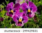 Botanic Gardening Plant Nature...
