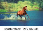 Stock photo red horse is running across the blue lake 299432231