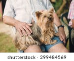 yorkshire dog on the lap of a... | Shutterstock . vector #299484569