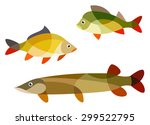 stylized fish   perch  carp and ... | Shutterstock .eps vector #299522795